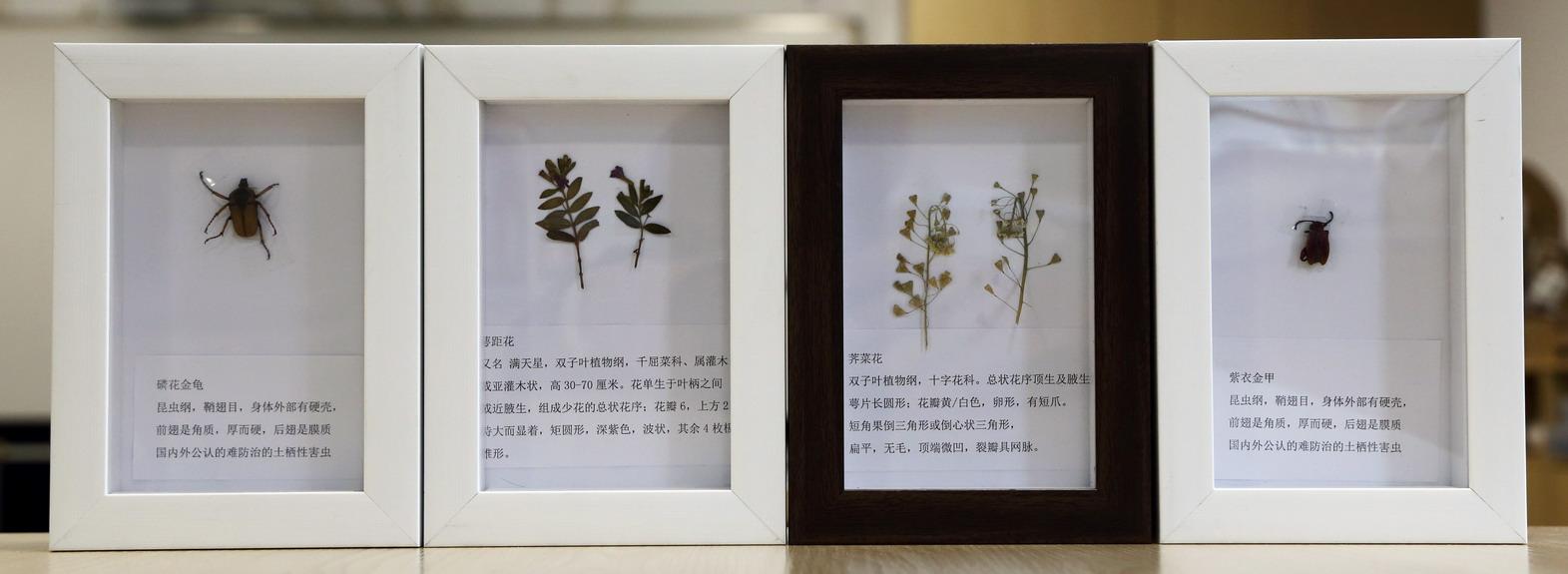 10植物昆虫_曾孔阳