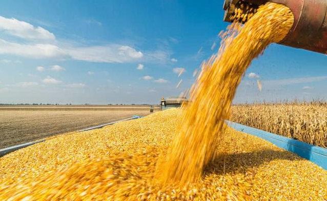 大起大落!玉米強勢上漲,豆粕下跌持續!
