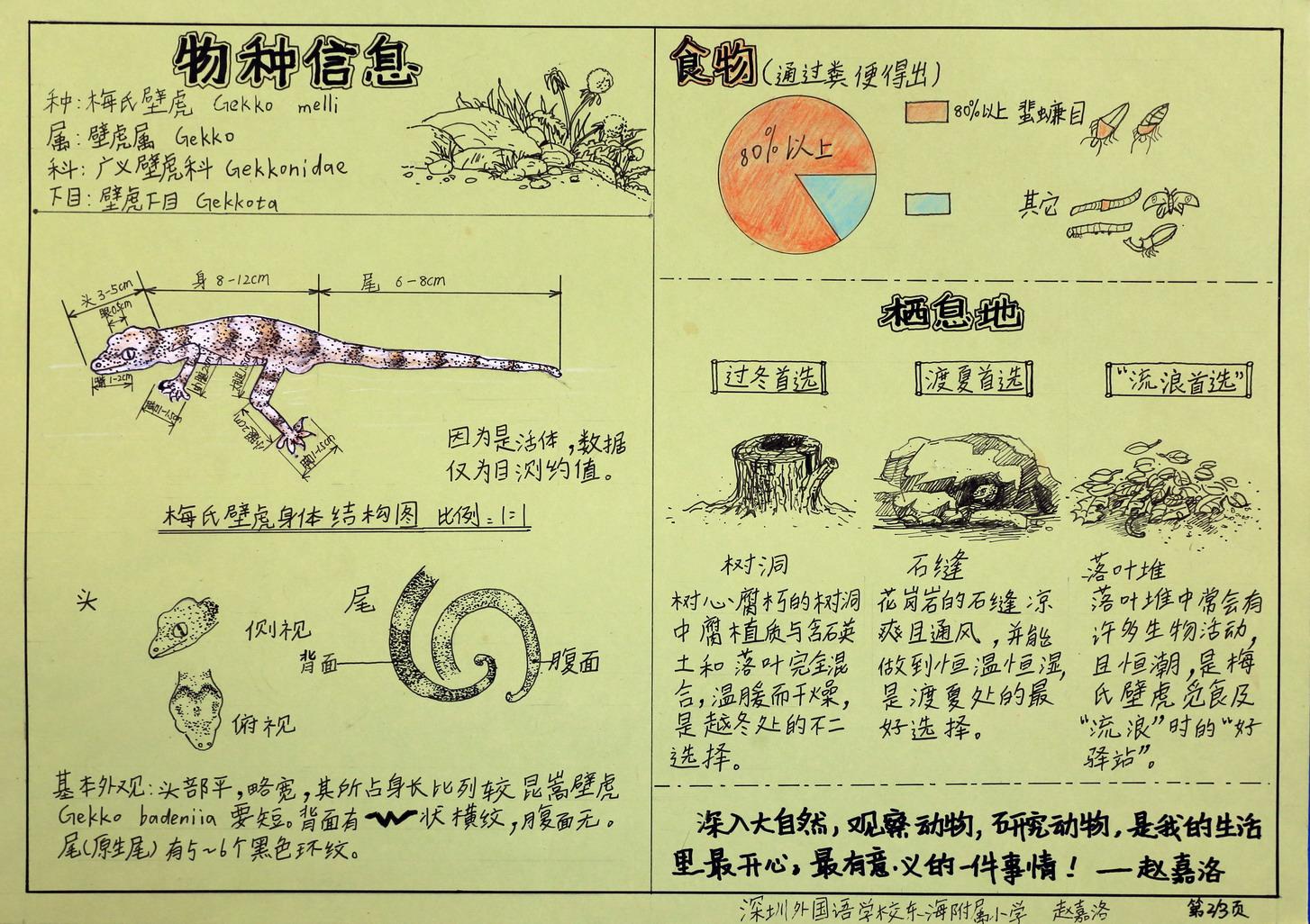 13梅氏壁虎2_赵嘉洛