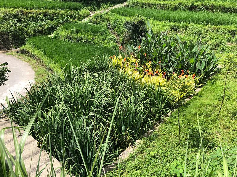 甌海區農村生活污水治理工程